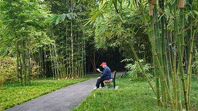 园林景观设计中运用竹子有什么作用呢