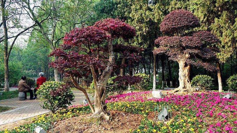 如何利用植物构成园林景观规划设计的空间