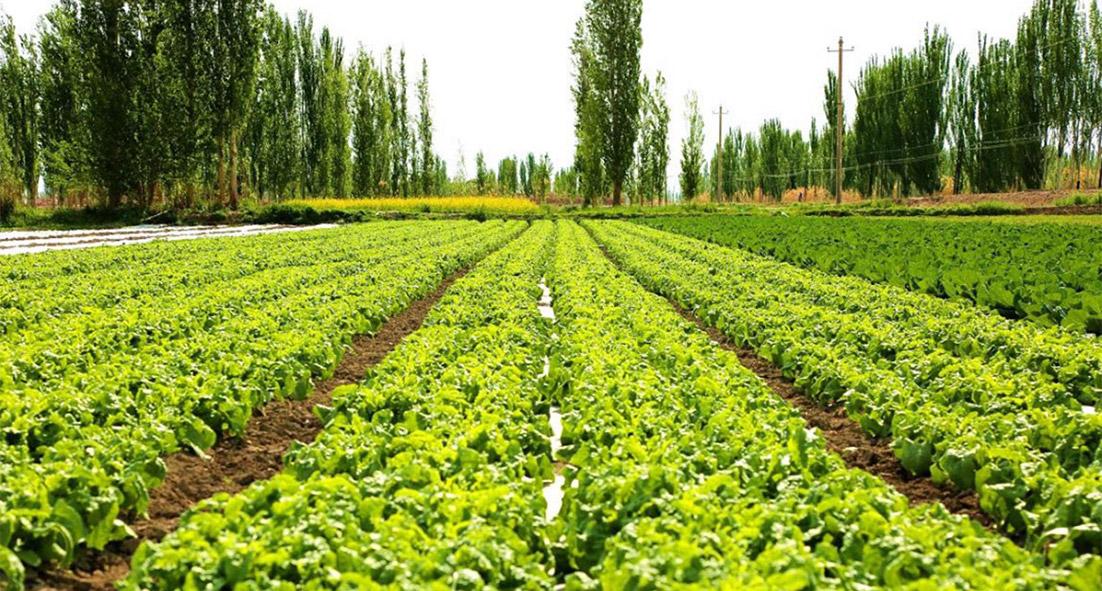 农业生态园图片