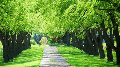 生态园林城市的园林绿化设计是非常重要的