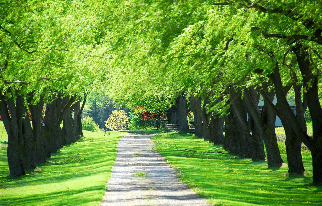 园林绿化设计图片