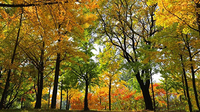 彩叶植物在景观设计中的4点应用原则