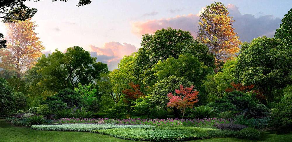 彩叶植物图片